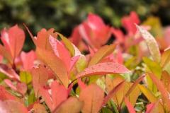 GBV_Kingsclub-Garden-Raindrops-on-leaves_Web