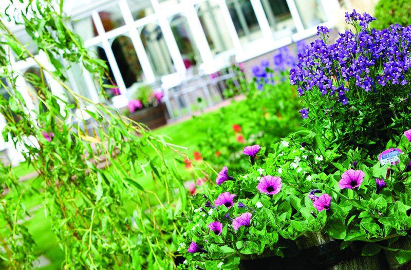 The gardens flowers at Kingsmills Hotel