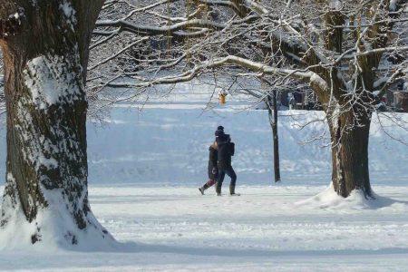 Family walking in a snowy park