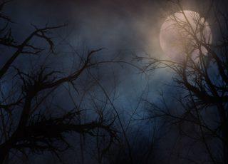 A spooky moonlit night