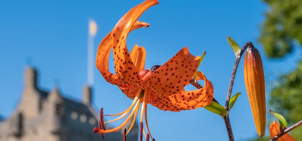 An image of an orange flower