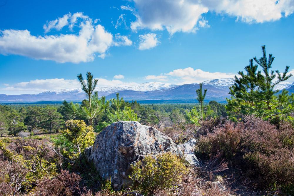 Cairngorm mountains seen from Rothiemurchus Estate near Aviemore